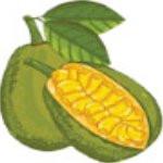 菠萝蜜短视频app
