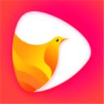 鸽迷直播app